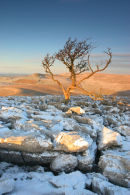 07-0841 Dawn Winter Light and Tree on a Karst Landscape with Scales Moor, Yorkshire Dales